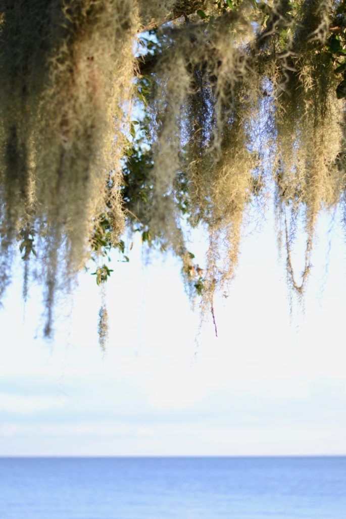 Trees on Lake Pontchartrain | A Weekend Travel Guide to Covington Louisiana