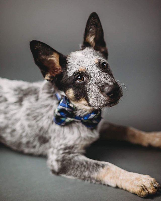 Dogs to Follow in Baton Roug<img src=