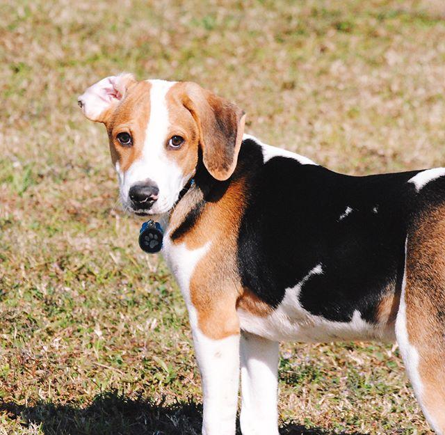 Dogs of BREC Burbank Baton Rouge