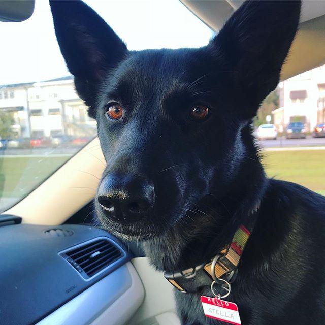 Baton Rouge Dogs To Follow On Instagram - Stella the German Shepherd