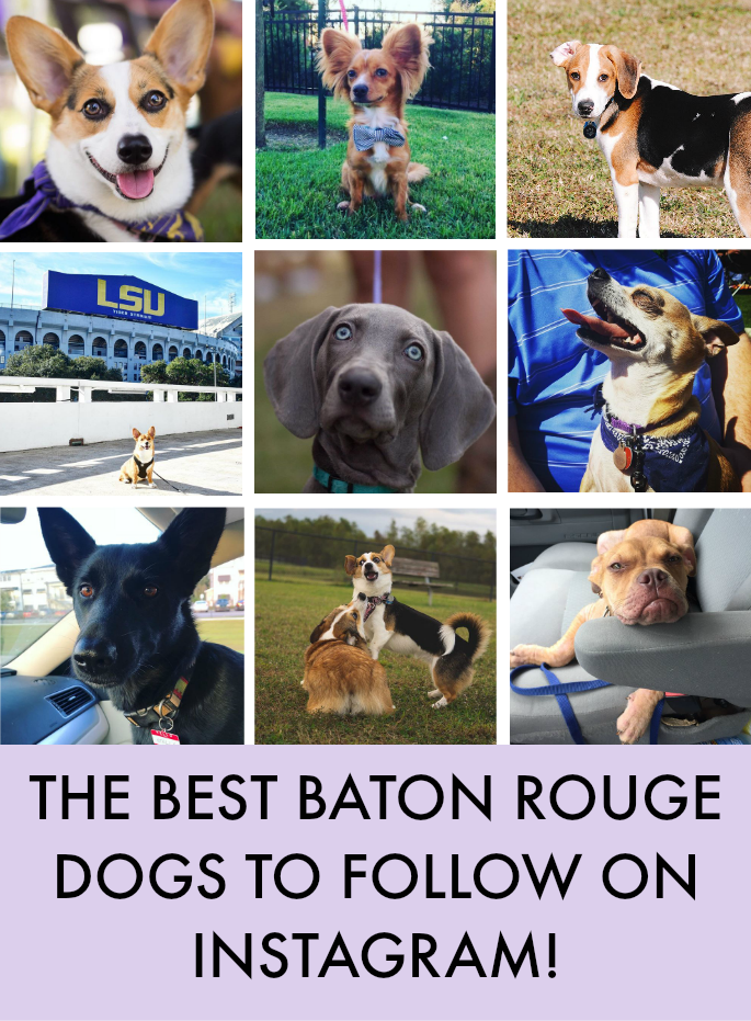 The Best Baton Rouge Dogs to Follow On Instagram   Southern Flair Blog